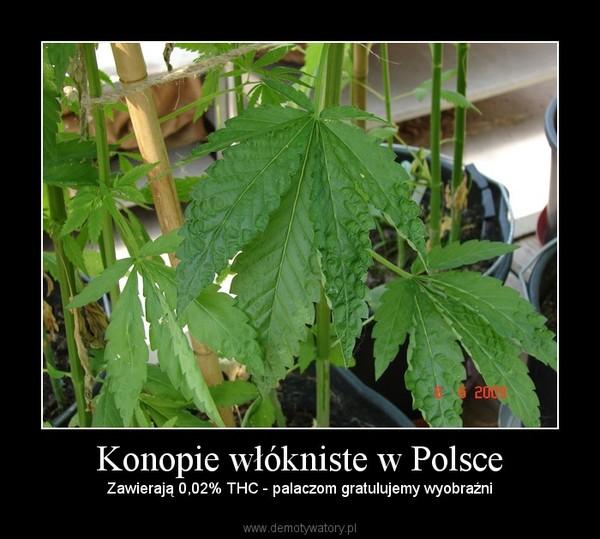 Konopie włókniste w Polsce – Zawierają 0,02% THC - palaczom gratulujemy wyobraźni