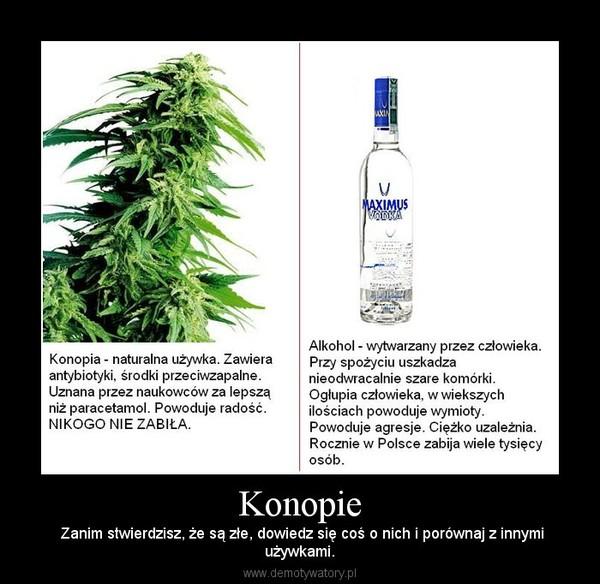 Konopie –  Zanim stwierdzisz, że są złe, dowiedz się coś o nich i porównaj z innymiużywkami.