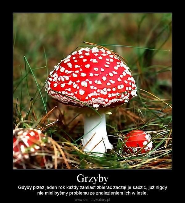 Grzyby – Gdyby przez jeden rok każdy zamiast zbierać zaczął je sadzić, już nigdynie mielibyśmy problemu ze znalezieniem ich w lesie.