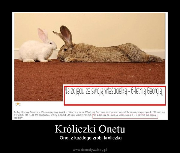 Króliczki Onetu –  Onet z każdego zrobi króliczka