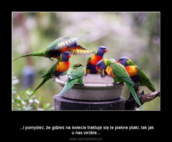 Egzotyka... –  ...i pomyśleć, że gdzieś na świecie traktuje się te piekne ptaki, tak jaku nas wróble...