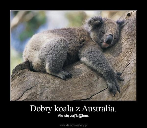 Dobry koala z Australia. – Ale się zaj*b@łem.