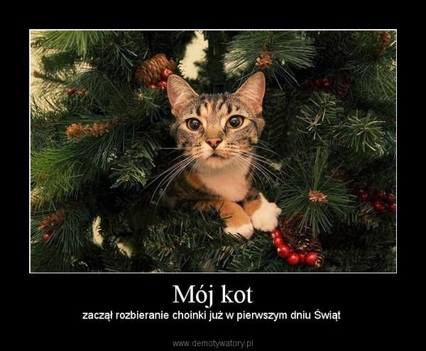 Mój Kot Demotywatorypl