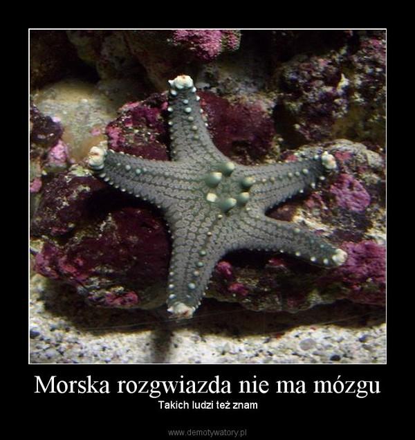 Morska rozgwiazda nie ma mózgu – Takich ludzi też znam