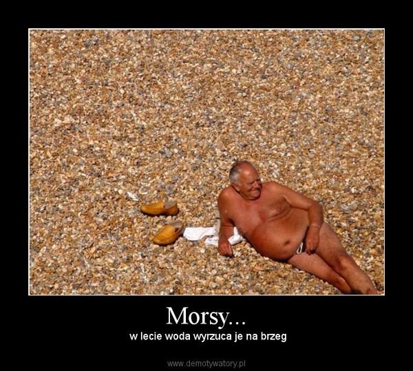 Morsy... – w lecie woda wyrzuca je na brzeg