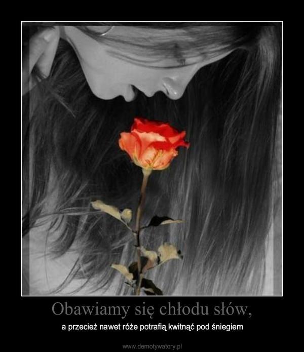 Obawiamy się chłodu słów, – a przecież nawet róże potrafią kwitnąć pod śniegiem