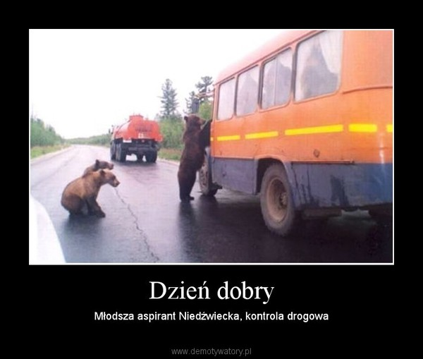 Dzień dobry – Młodsza aspirant Niedźwiecka, kontrola drogowa
