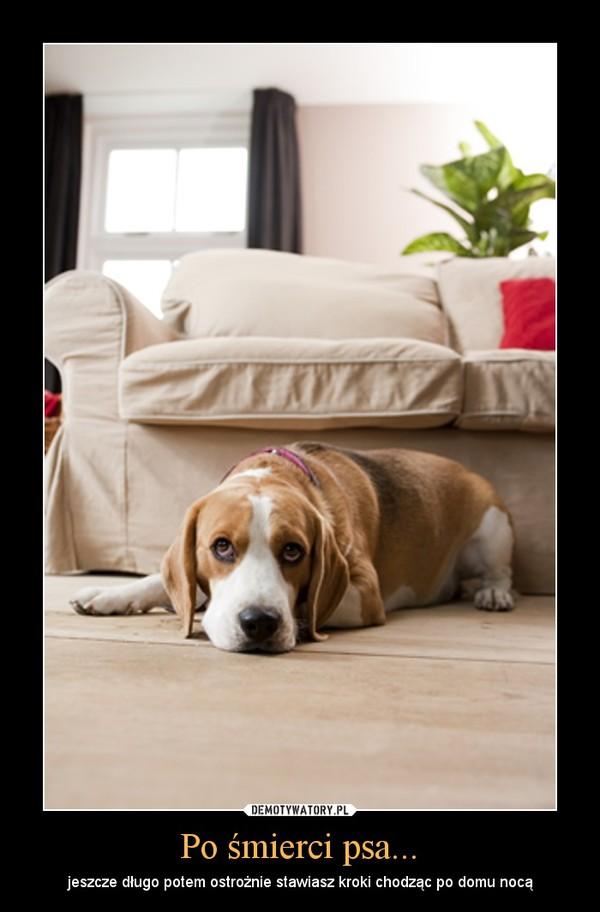 Po śmierci psa... – jeszcze długo potem ostrożnie stawiasz kroki chodząc po domu nocą