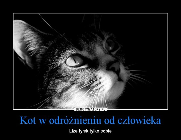 Kot w odróżnieniu od człowieka – Liże tyłek tylko sobie