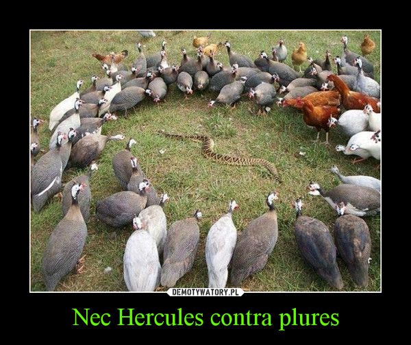 Nec Hercules contra plures –