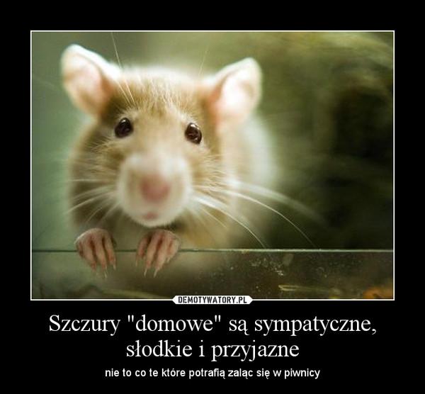 Szczury Domowe Są Sympatyczne Słodkie I Przyjazne Demotywatory Pl