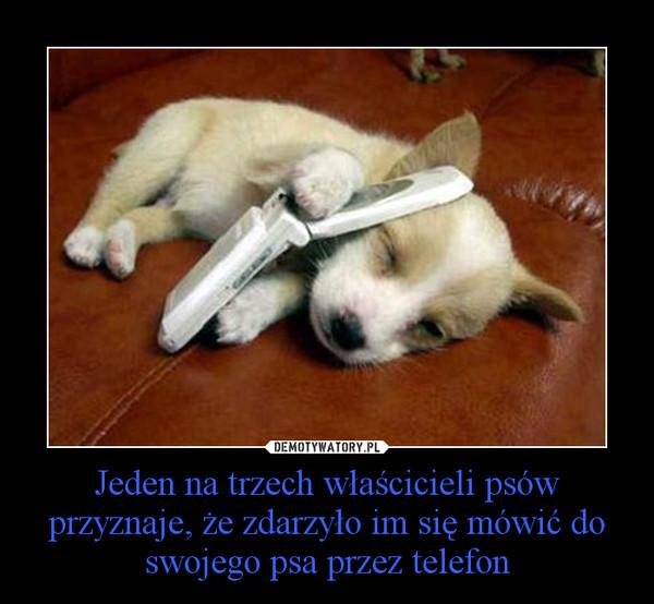 Jeden na trzech właścicieli psów przyznaje, że zdarzyło im się mówić do swojego psa przez telefon –