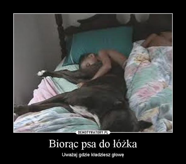 Biorąc Psa Do łóżka Demotywatorypl