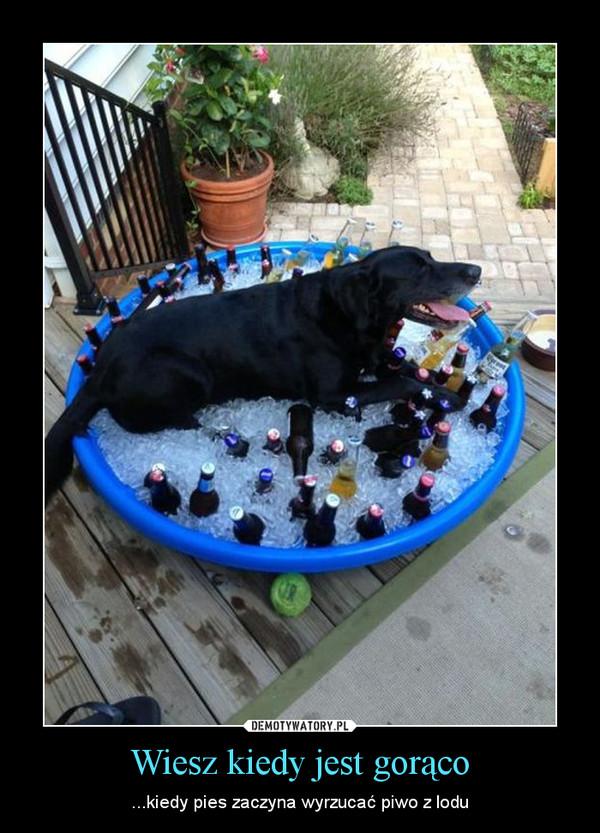 Wiesz kiedy jest gorąco – ...kiedy pies zaczyna wyrzucać piwo z lodu