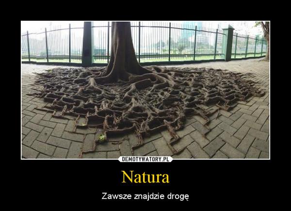 Natura – Zawsze znajdzie drogę
