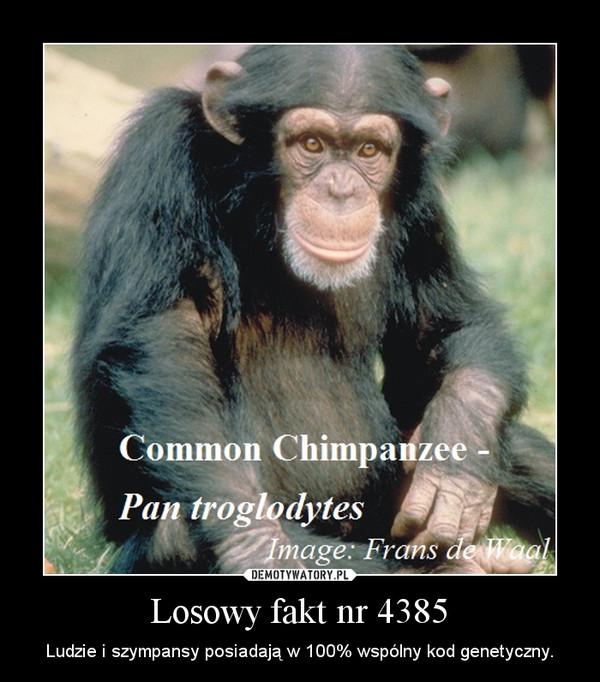 Losowy fakt nr 4385 – Ludzie i szympansy posiadają w 100% wspólny kod genetyczny.