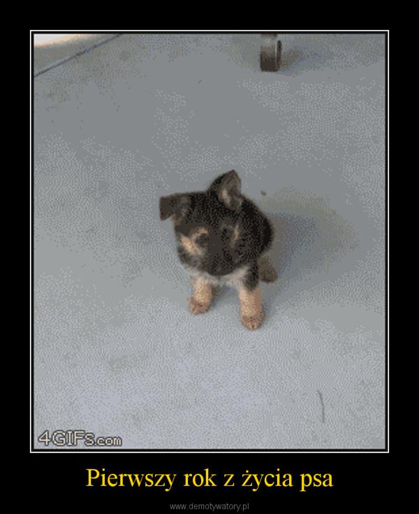 Pierwszy rok z życia psa –
