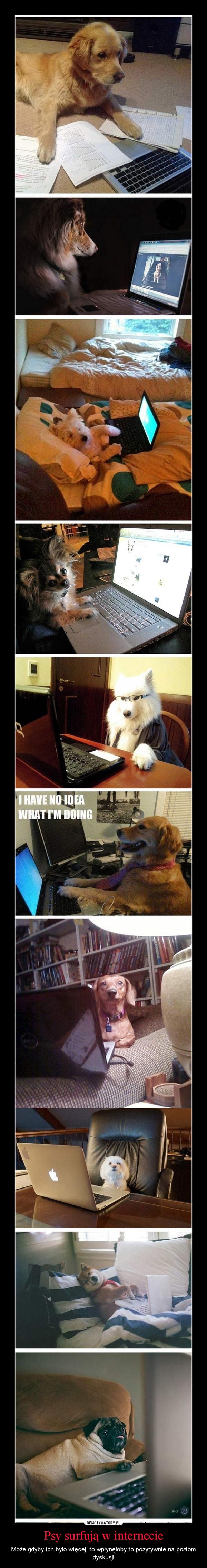 Psy surfują w internecie – Może gdyby ich było więcej, to wpłynęłoby to pozytywnie na poziom dyskusji