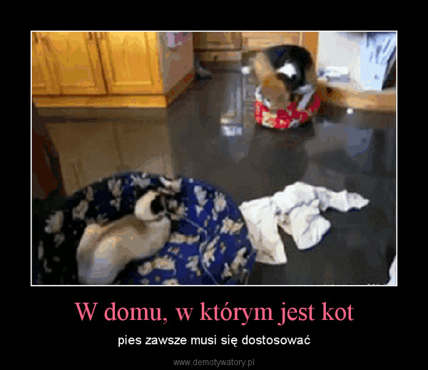 W domu, w którym jest kot – pies zawsze musi się dostosować