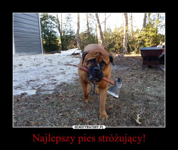 Najlepszy pies stróżujący! –