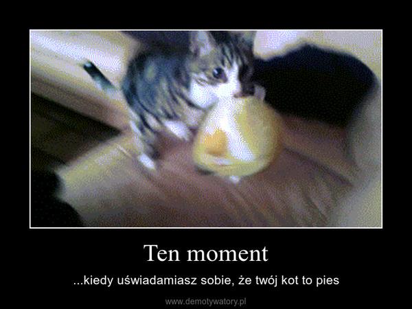 Ten moment – ...kiedy uświadamiasz sobie, że twój kot to pies
