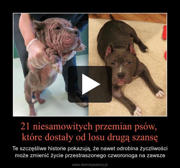 21 niesamowitych przemian psów, które dostały od losu drugą szansę – Te szczęśliwe historie pokazują, że nawet odrobina życzliwości może zmienić życie przestraszonego czworonoga na zawsze