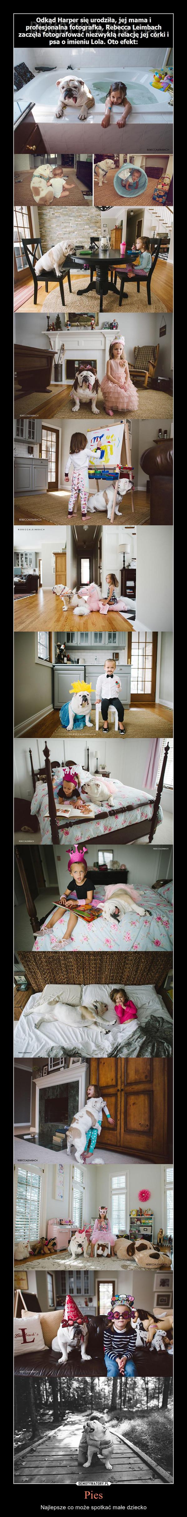 Pies – Najlepsze co może spotkać małe dziecko