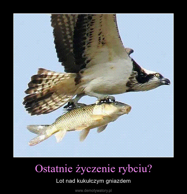 Ostatnie życzenie rybciu? – Lot nad kukułczym gniazdem