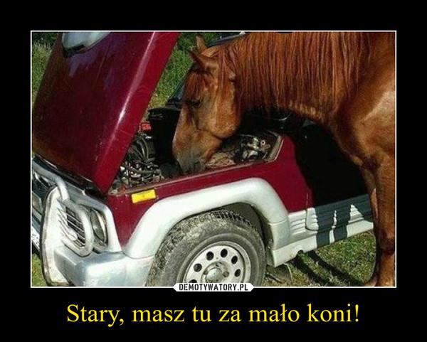 Stary, masz tu za mało koni! –