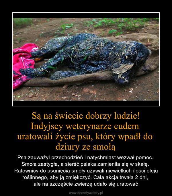 Są na świecie dobrzy ludzie!Indyjscy weterynarze cudem uratowali życie psu, który wpadł do dziury ze smołą – Psa zauważył przechodzień i natychmiast wezwał pomoc. Smoła zastygła, a sierść psiaka zamieniła się w skałę. Ratownicy do usunięcia smoły używali niewielkich ilości oleju roślinnego, aby ją zmiękczyć. Cała akcja trwała 2 dni, ale na szczęście zwierzę udało się uratować