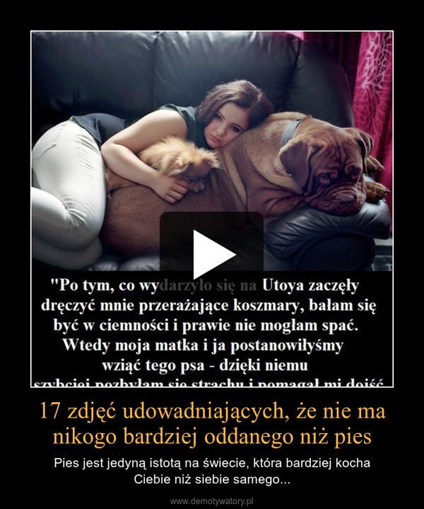 17 zdjęć udowadniających, że nie ma nikogo bardziej oddanego niż pies – Pies jest jedyną istotą na świecie, która bardziej kochaCiebie niż siebie samego...
