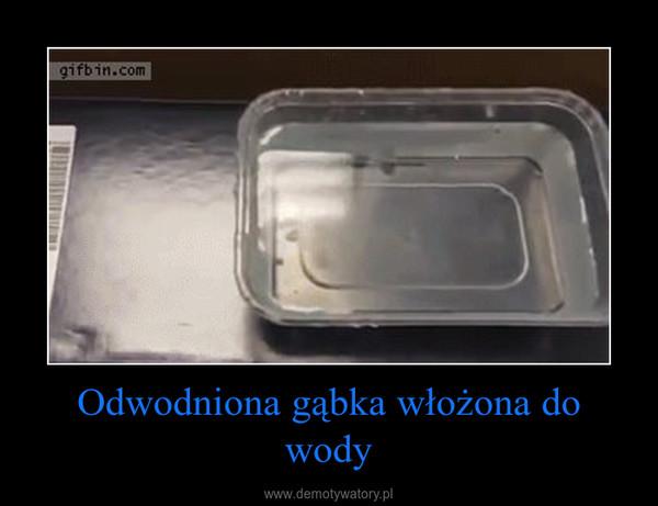 Odwodniona gąbka włożona do wody –
