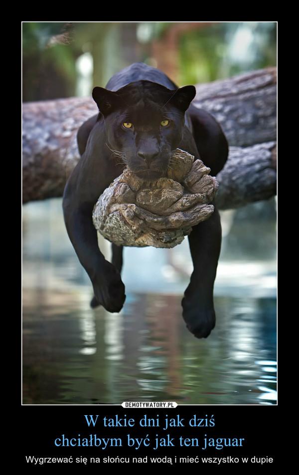 W takie dni jak dziśchciałbym być jak ten jaguar – Wygrzewać się na słońcu nad wodą i mieć wszystko w dupie