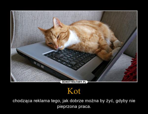 Kot – chodząca reklama tego, jak dobrze można by żyć, gdyby nie pieprzona praca.
