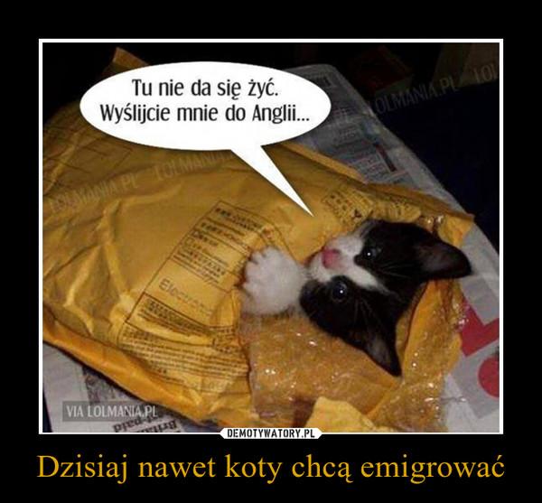 Dzisiaj nawet koty chcą emigrować –