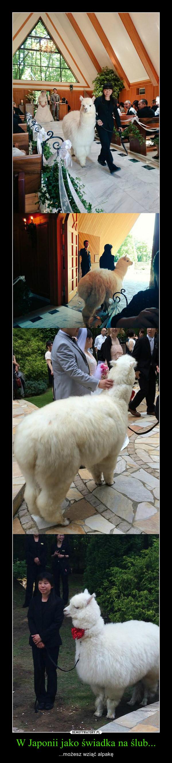 W Japonii jako świadka na ślub... – ...możesz wziąć alpakę