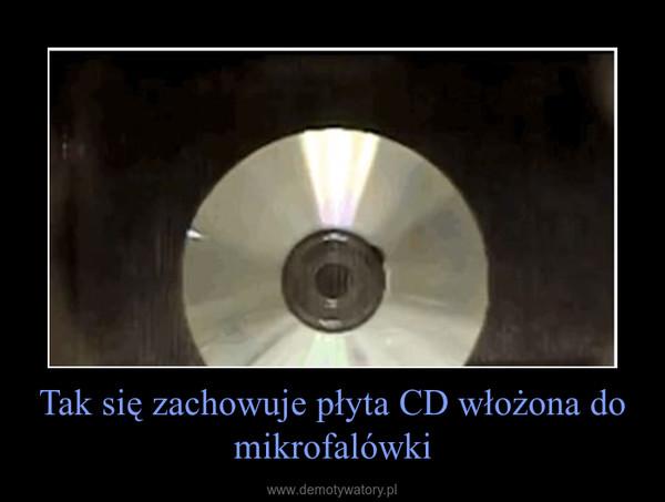 Tak się zachowuje płyta CD włożona do mikrofalówki –