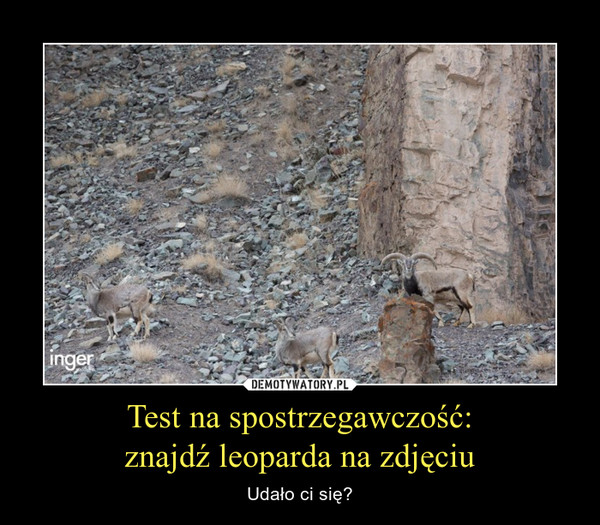 Test na spostrzegawczość:znajdź leoparda na zdjęciu – Udało ci się?