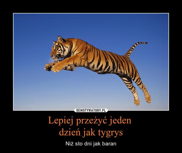 Lepiej przeżyć jeden dzień jak tygrys – Niż sto dni jak baran