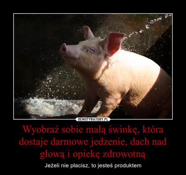 Wyobraź sobie małą świnkę, która dostaje darmowe jedzenie, dach nad głową i opiekę zdrowotną – Jeżeli nie płacisz, to jesteś produktem