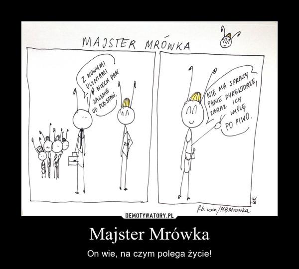 Majster Mrówka – On wie, na czym polega życie!