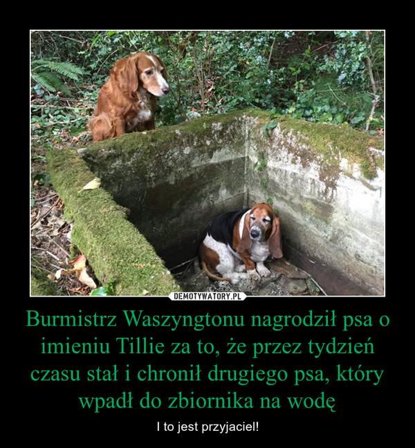 Burmistrz Waszyngtonu nagrodził psa o imieniu Tillie za to, że przez tydzień czasu stał i chronił drugiego psa, który wpadł do zbiornika na wodę – I to jest przyjaciel!