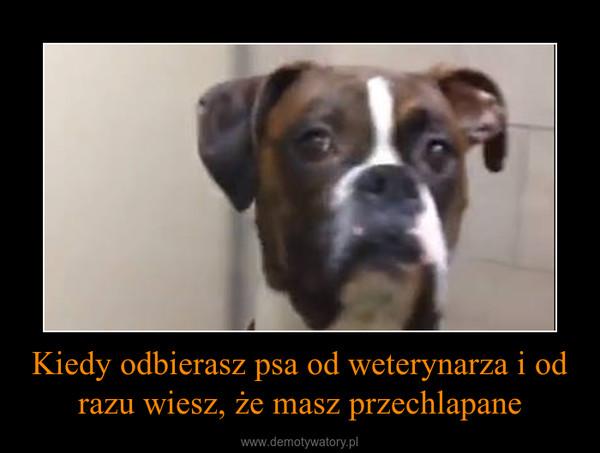 Kiedy odbierasz psa od weterynarza i od razu wiesz, że masz przechlapane –