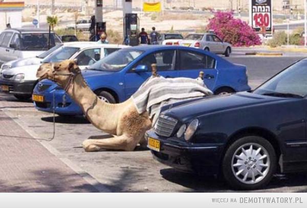 Parking częściowo żywy –