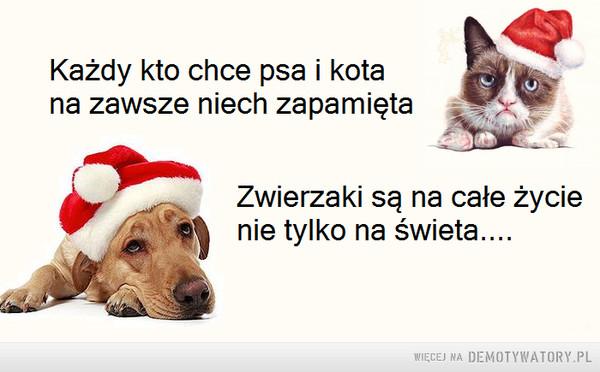 Przed świętami warto zapamiętać –  Każdy kto chce psa i kota na zawsze niech zapamiętaZwierzaki są na całe życie nie tylko na święta