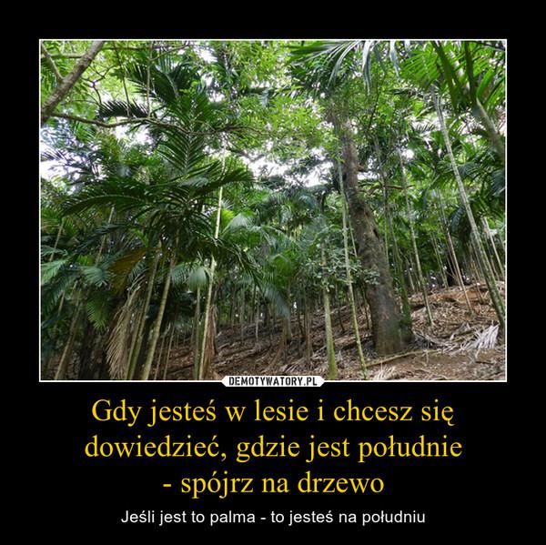 Gdy jesteś w lesie i chcesz się dowiedzieć, gdzie jest południe- spójrz na drzewo – Jeśli jest to palma - to jesteś na południu