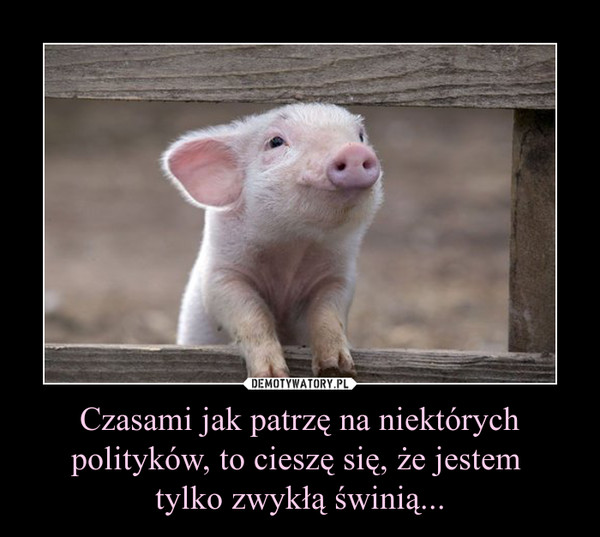 Czasami jak patrzę na niektórych polityków, to cieszę się, że jestem tylko zwykłą świnią... –