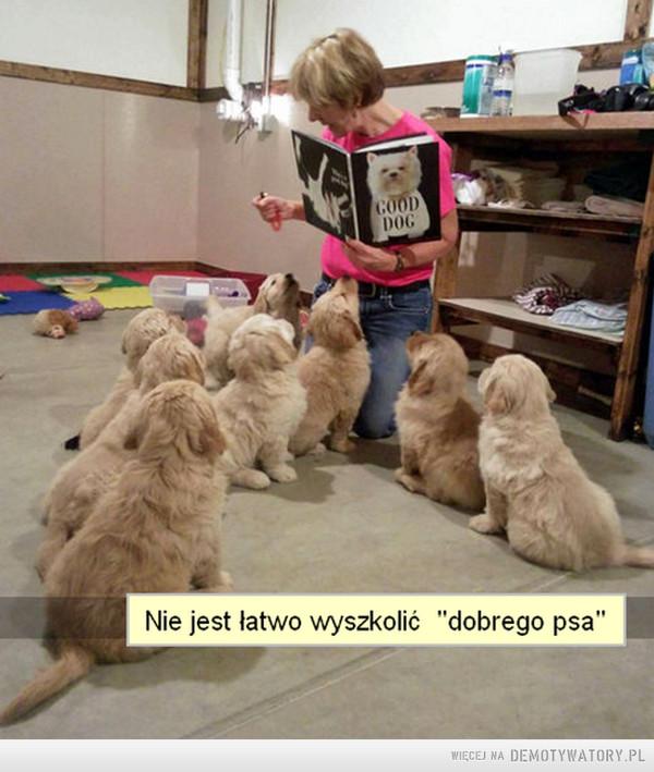 Nie jest łatwo wyszkolić psa –