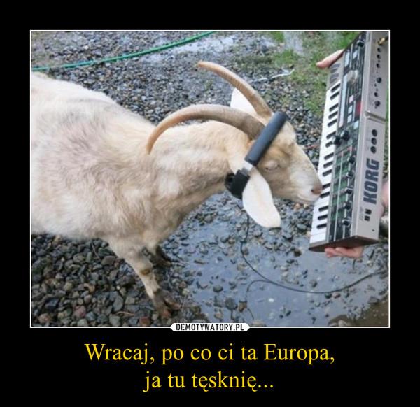 Wracaj, po co ci ta Europa,ja tu tęsknię... –