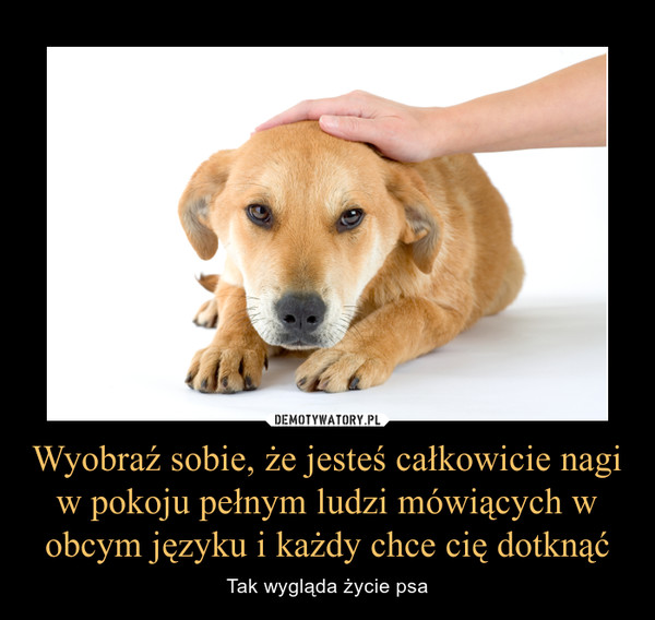 Wyobraź sobie, że jesteś całkowicie nagi w pokoju pełnym ludzi mówiących w obcym języku i każdy chce cię dotknąć – Tak wygląda życie psa
